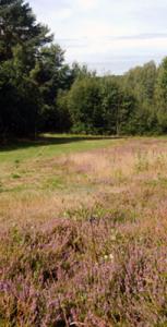 Heideflächen im Mürschnitzer Sack 2015